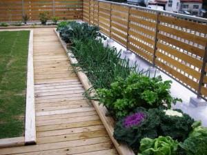 屋上緑化 野菜栽培